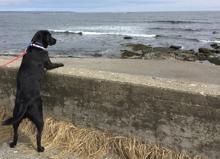 Just standing at the wall watching the waves...