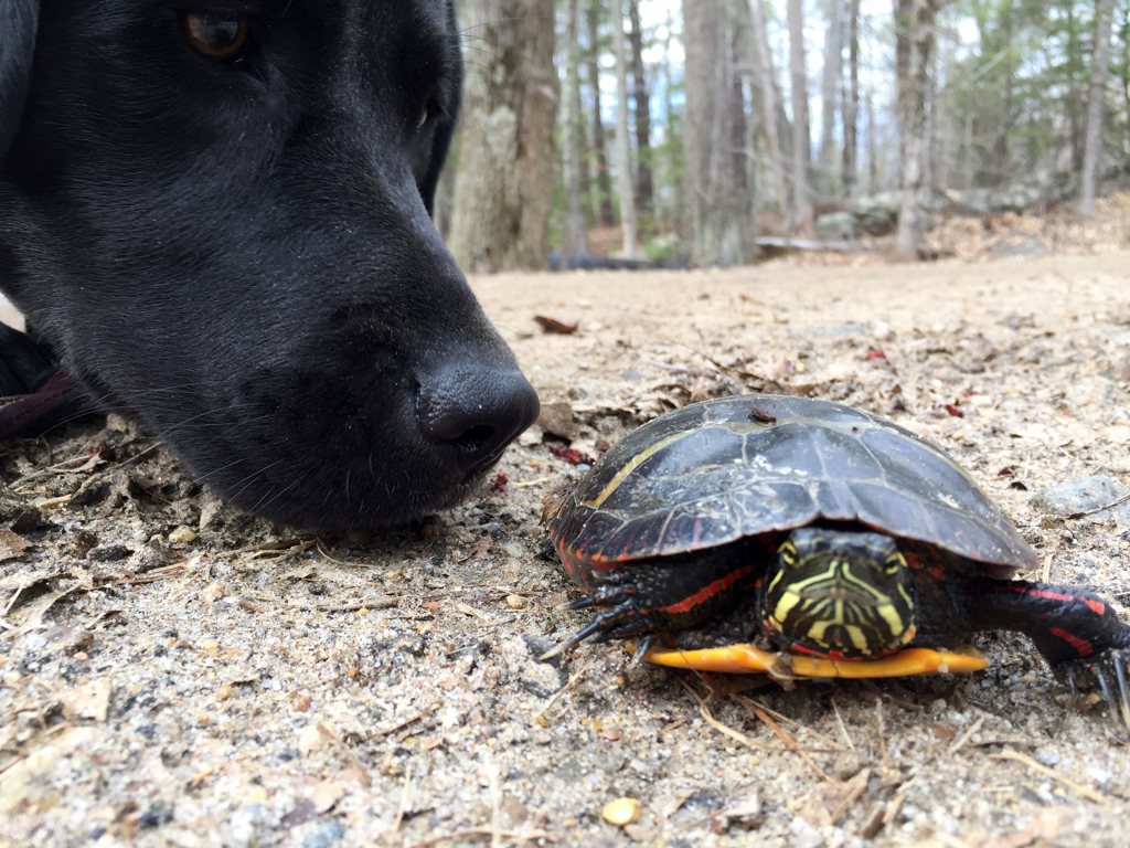Lucy's first turtle encounter...