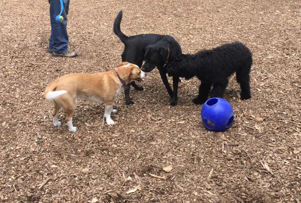 Making friends at the dog park...