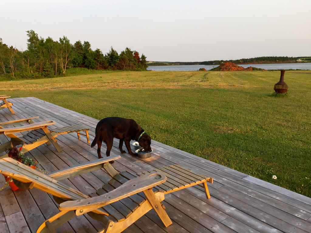 Lucy dining table for the week in PEI...