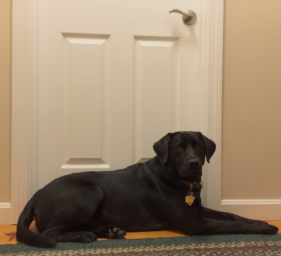 Waiting patiently outside the door while Dad showers...