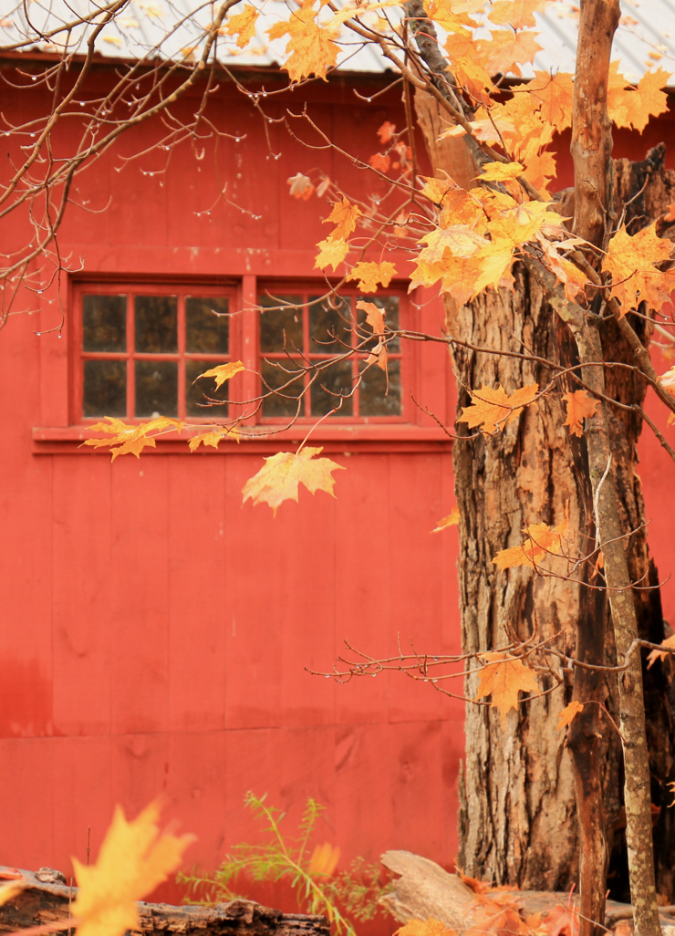 Barn and leaves...