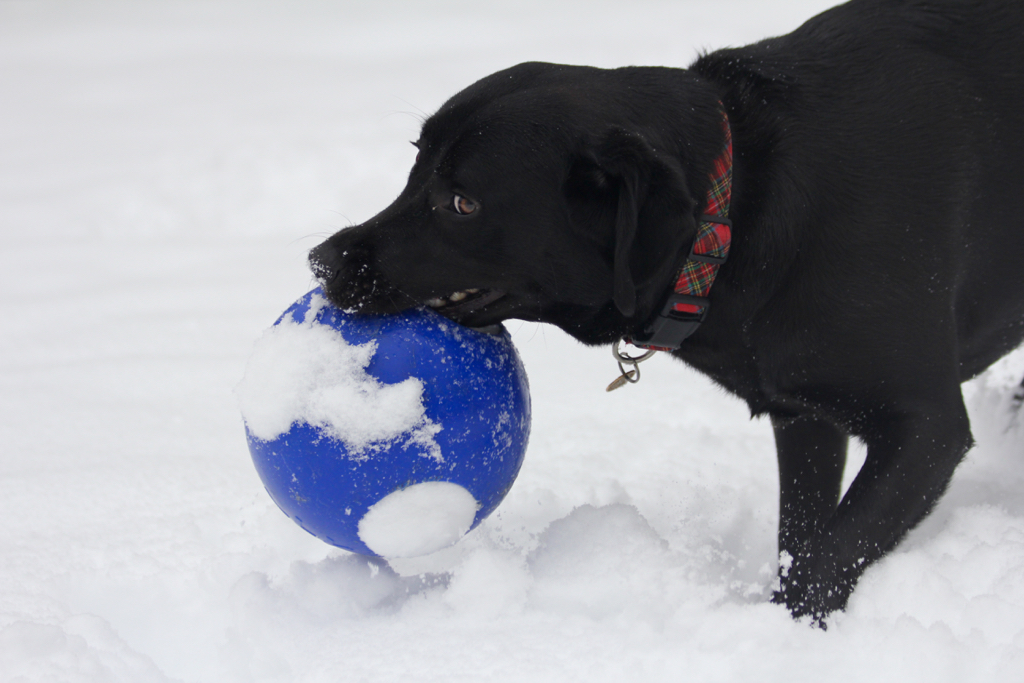 Jolly ball fun in the snow...