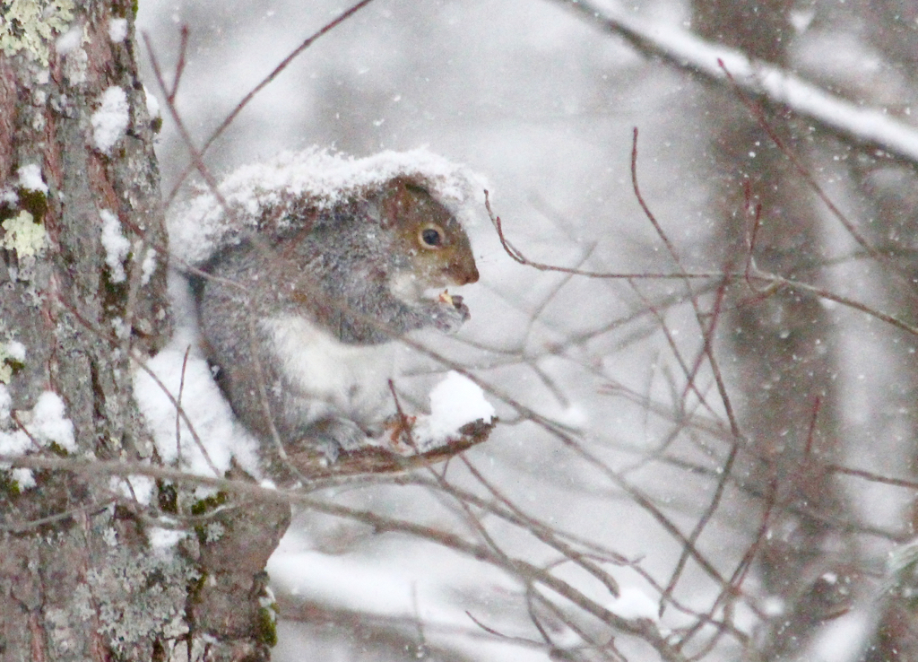 A little snowy snack...