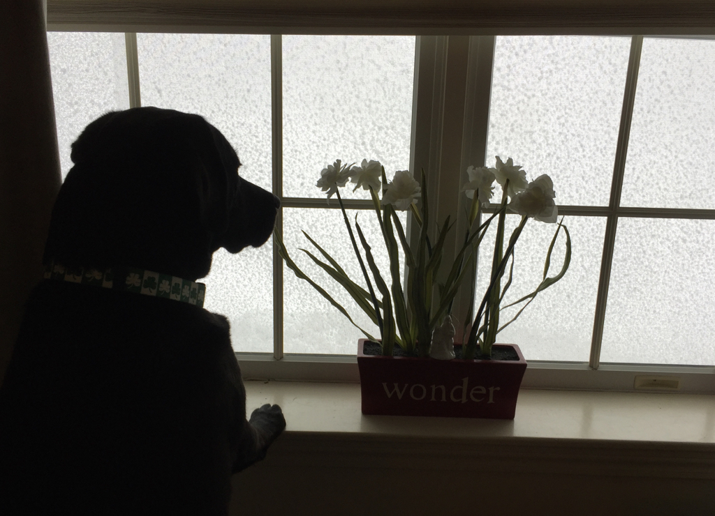 Tuesday's blizzard watchdog...