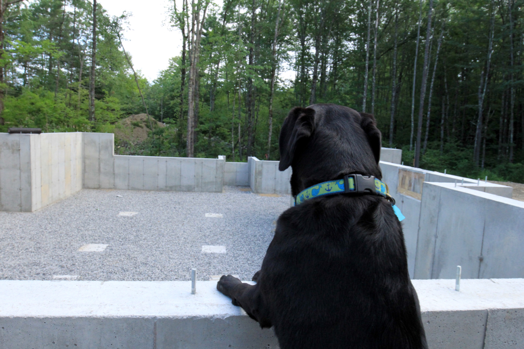 Lucy surveying the foundation from the